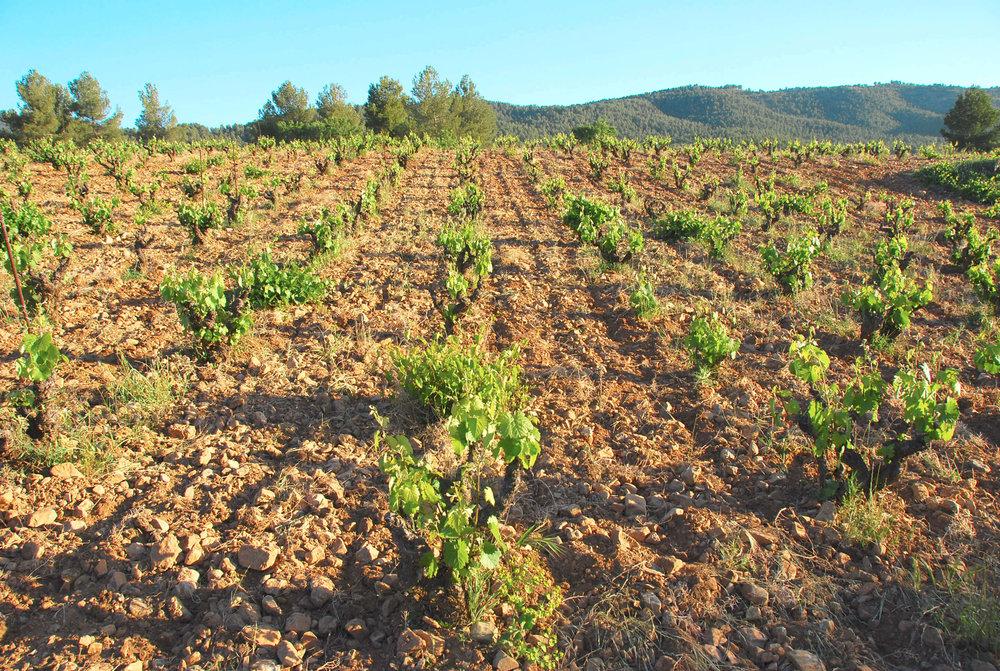 d.O. BULLAS - Spain