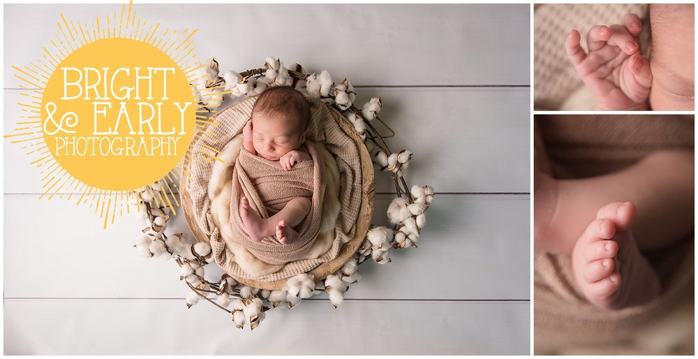 newborn cotton.jpg