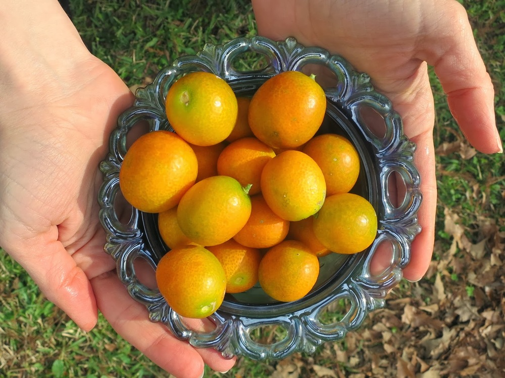 depression glass, kumquats, bowl of citrus