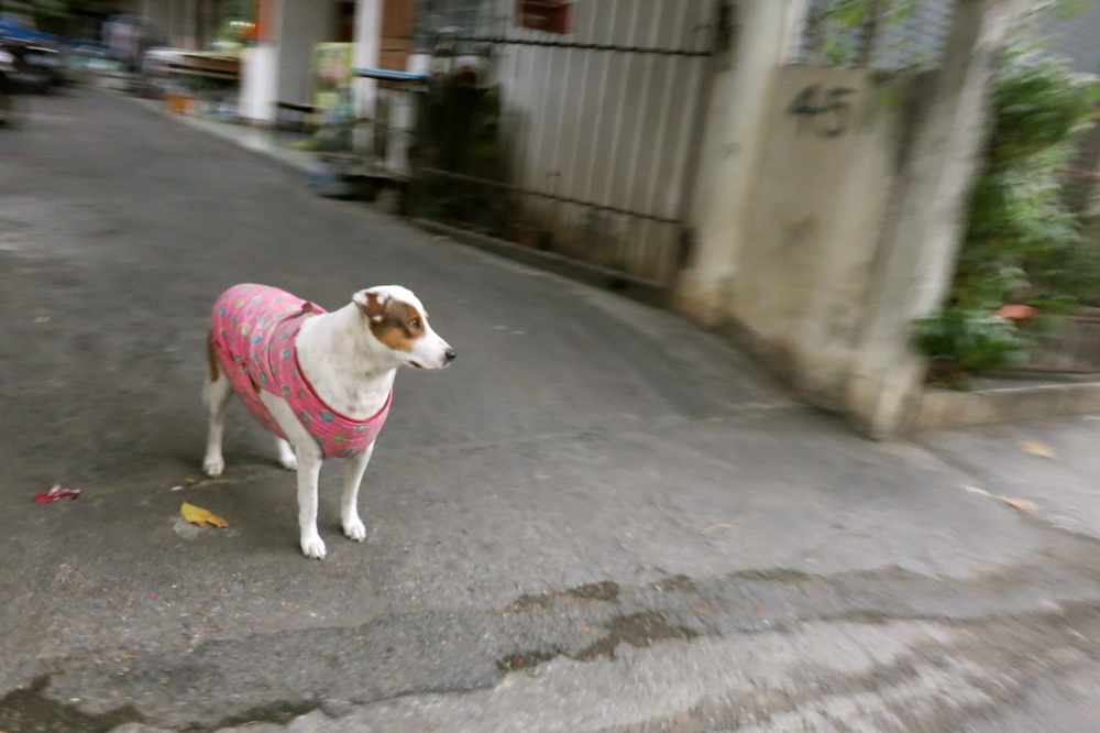 Thai doggy fashion