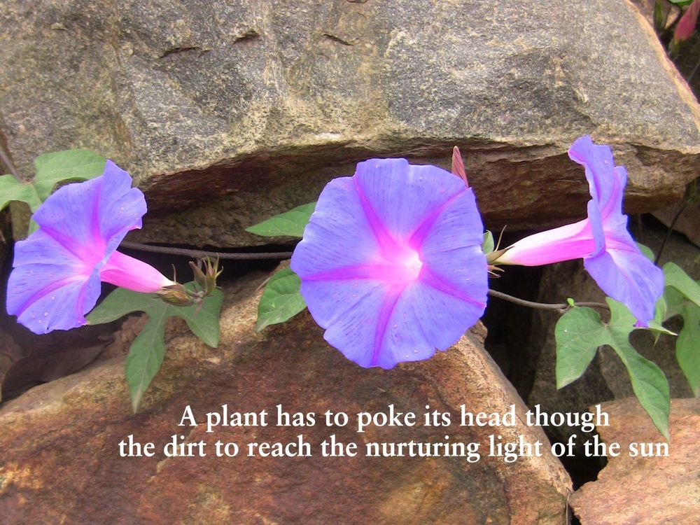 A plant has to poke its head though.jpg