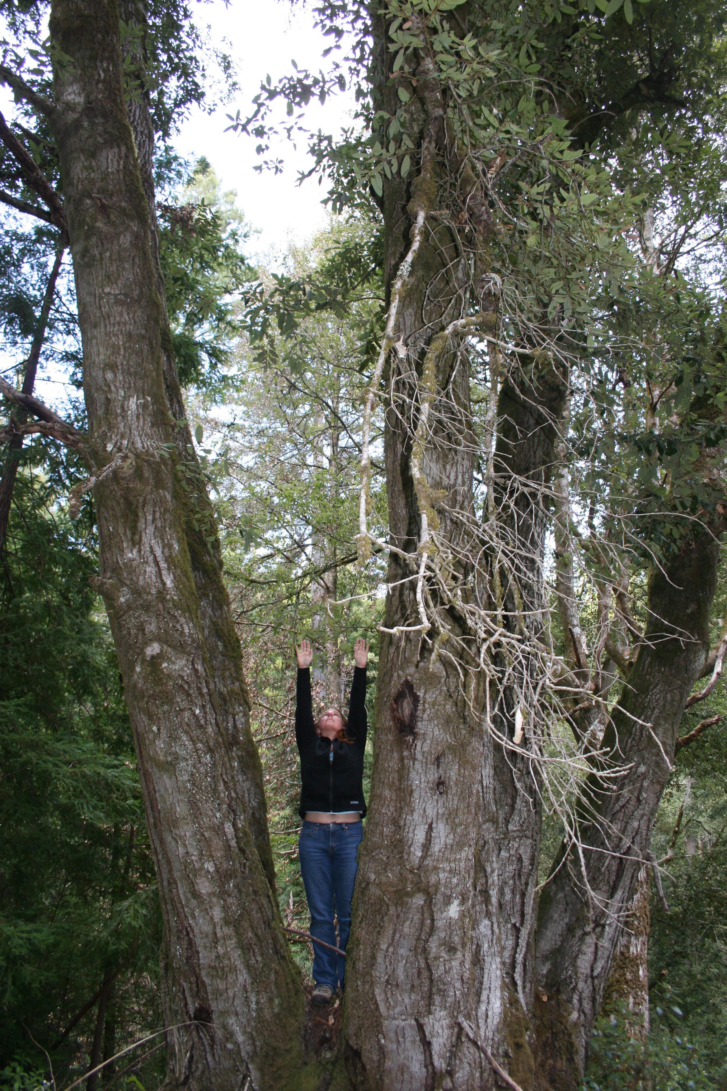 me as tree