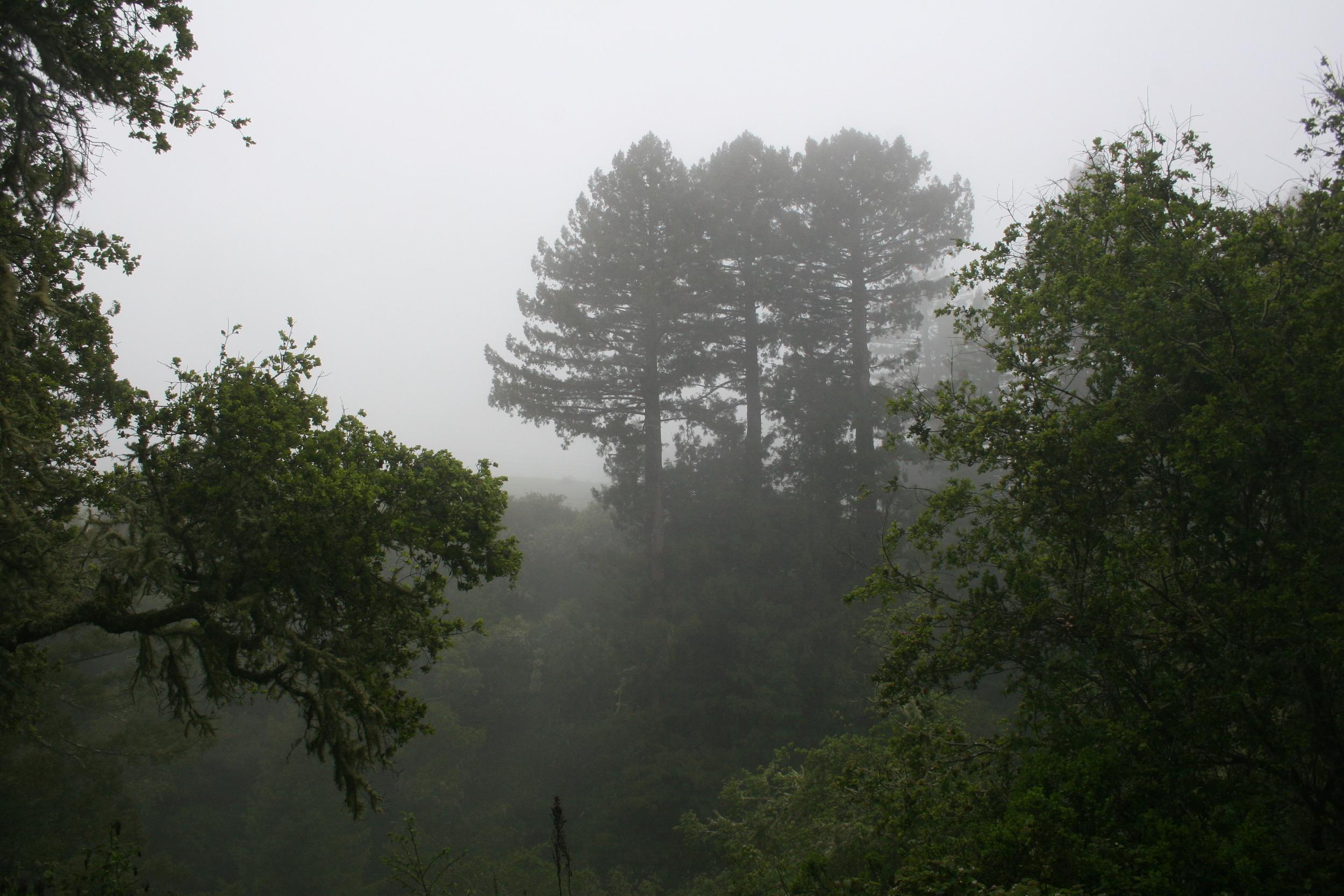 misty moisty