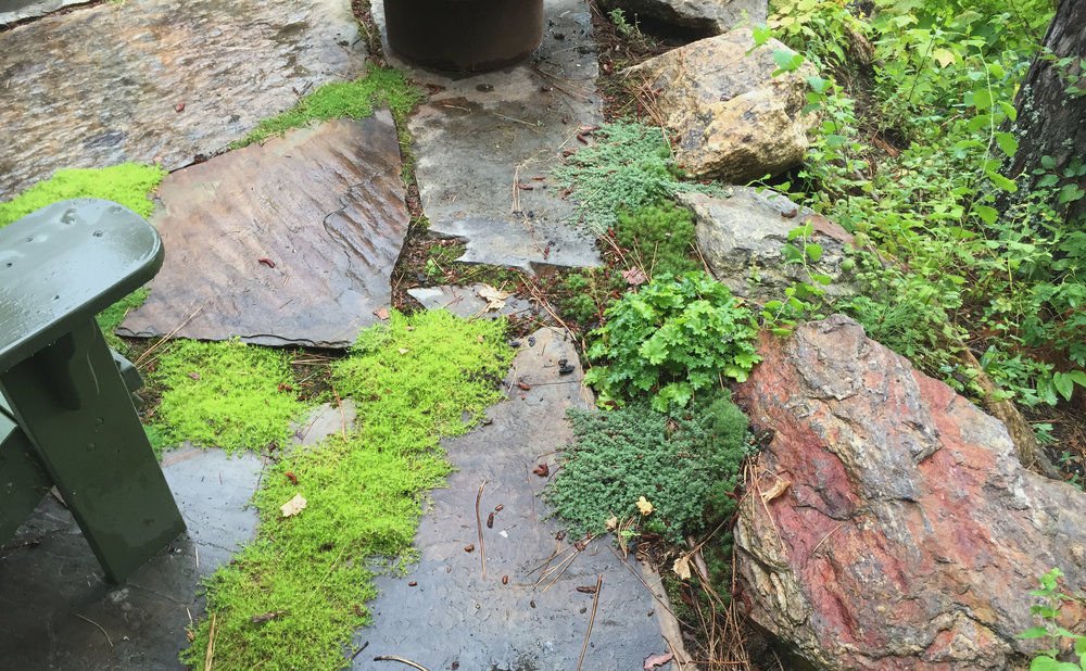 flagstone patio with moss and thyme