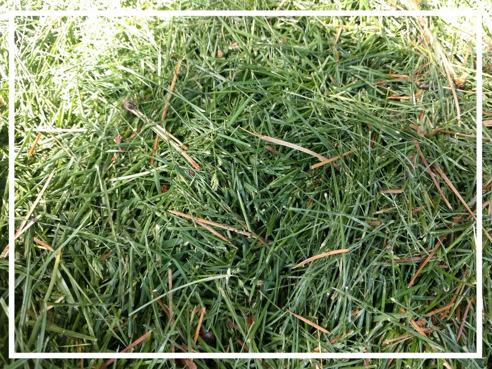 Grass clippings have a C:N ratio of about 20:1, putting them on the nitrogen-rich end of the spectrum.