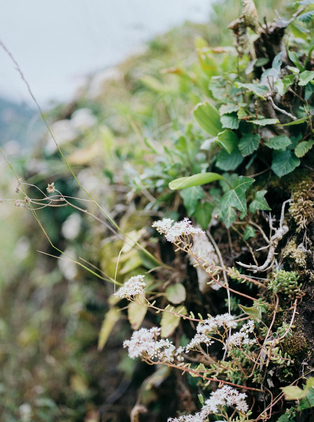 Alyssa Joy Photography - France travel photographer