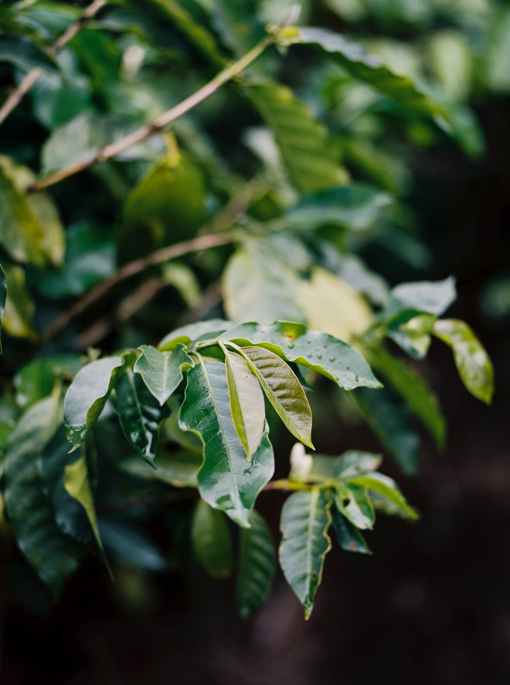 Alyssa Joy Photography - Costa Rica travel photographer