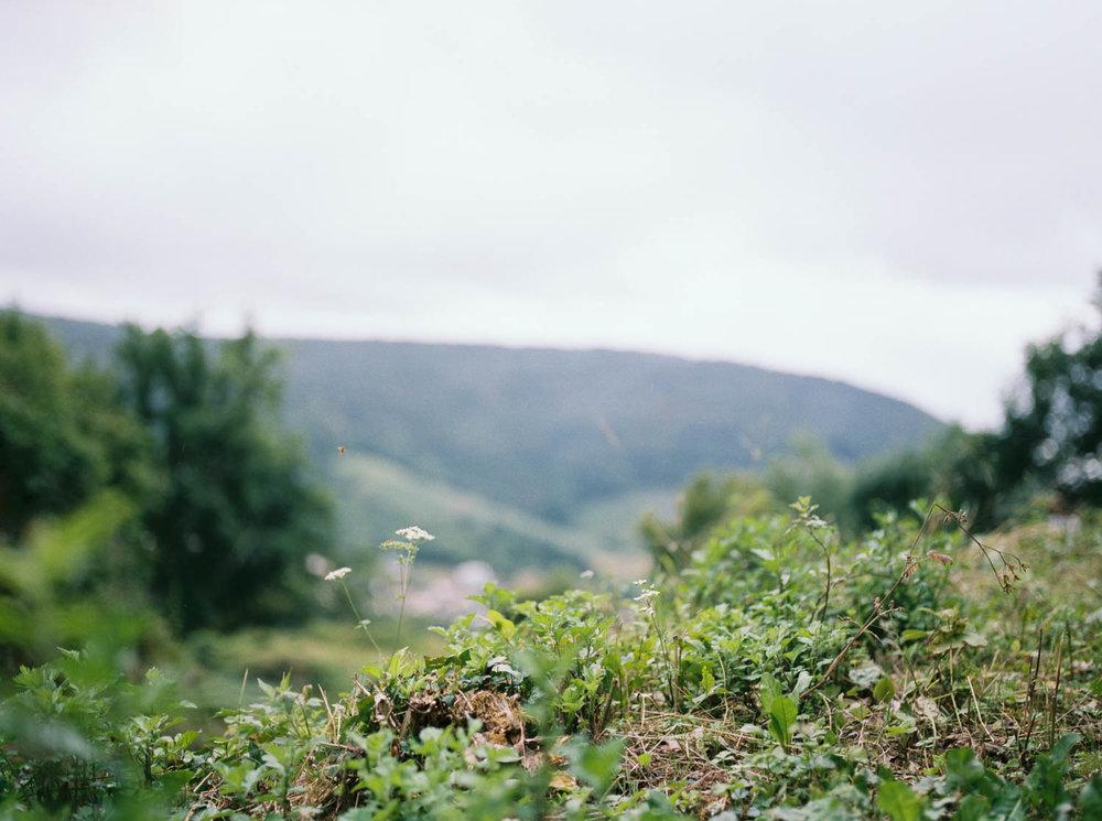 Alsacefilm_0003.jpg