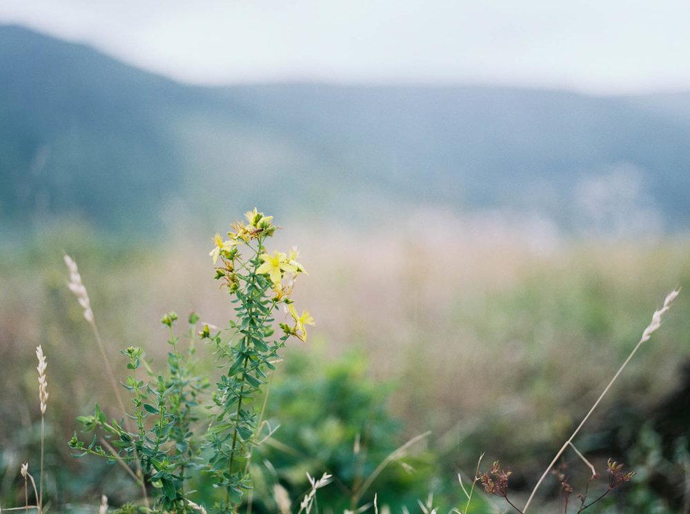 Alsacefilm_0008.jpg