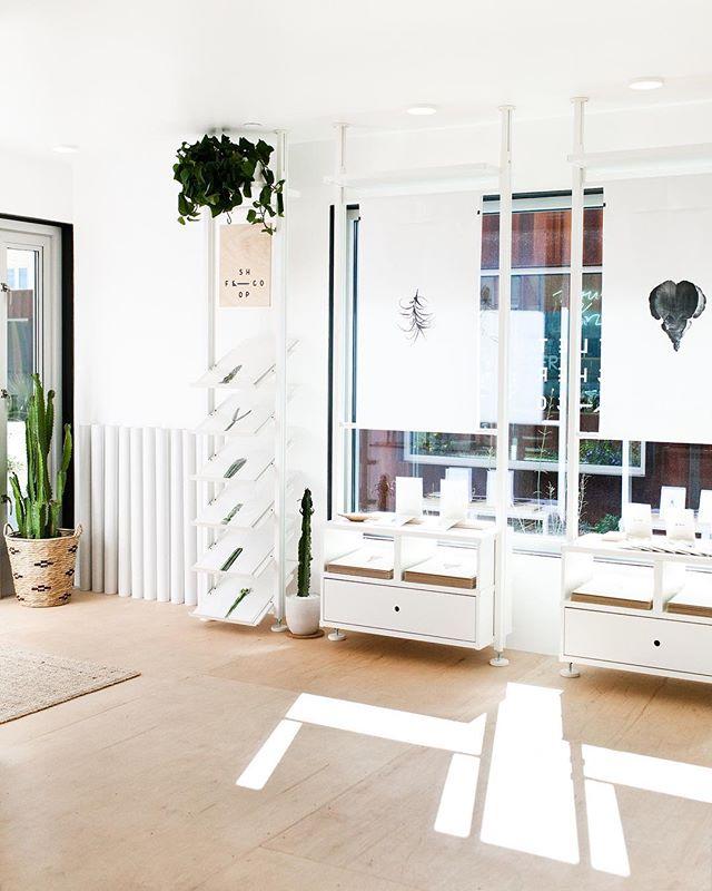 See ya 👋🏻 at the shop today 11-5! 🌵🌿 - - - - #shopfletcherandco #plantshop #white #msaannex #minimalist #cactus #neutral #plantspiration #plantsofinstagram #instacactus #shippingcontainerinspiration #tucson #thisistucson #jungalowstyle #modern #artwork #lifearoundplants #finditliveit