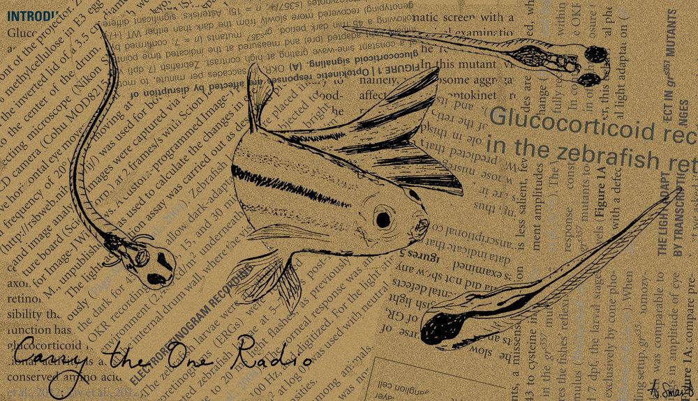 zebrafish1 sig.jpg