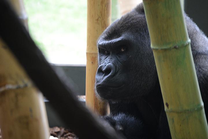 animals6.jpg