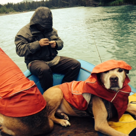 Sky - Alaska Salmon Fishing Dog