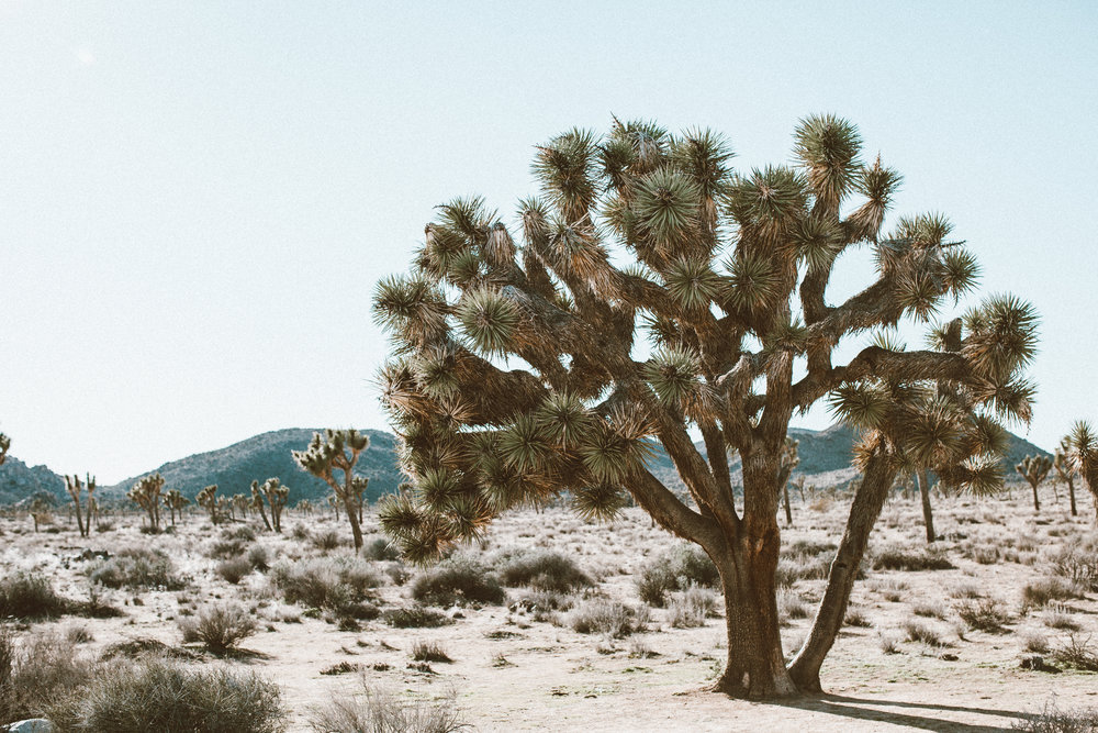 Christina Foret - Travel Blogger Joshua Tree National Park. California.