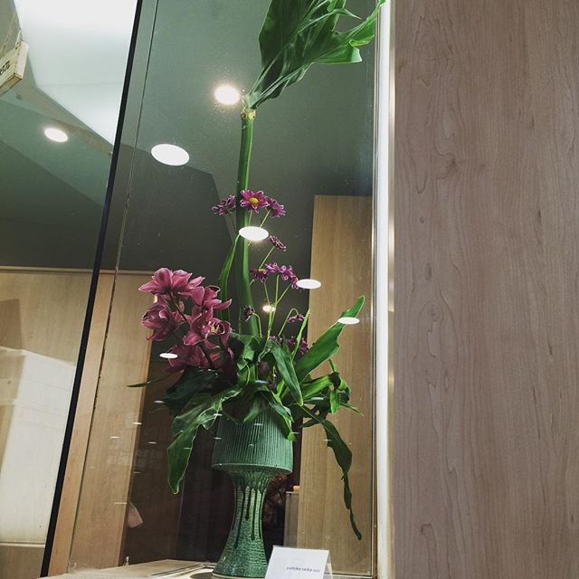 This week's Flower. It's really cool!  #waraku #massage#japanese #chatswood #sydney  #ikebana #australia