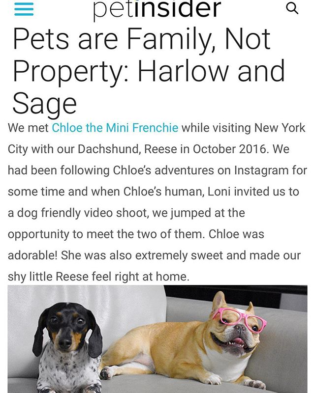 my dear friends @harlowandsage are kicking off a very important new weekly series on @PetInsider. please read + share ❤️ #petsarefamilynotproperty  swipe up in stories or direct link here: https://petinsider.com/pets-are-family-not-property-harlow-and-sage  if you're interested in sharing your story about how #petsarefamilynotproperty email hi@petinsider.com