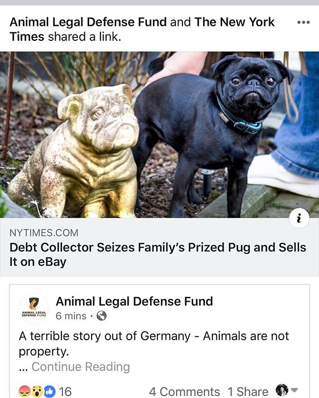 please sign the #petsarefamilynotproperty pledge if you haven't already (link in bio + here:  http://aldf.org/animalsnotproperty) + share with everyone you know 🙏🏻