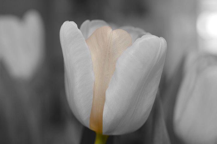 flower-144285__480.jpg