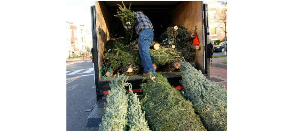 Trees on Truck.jpg
