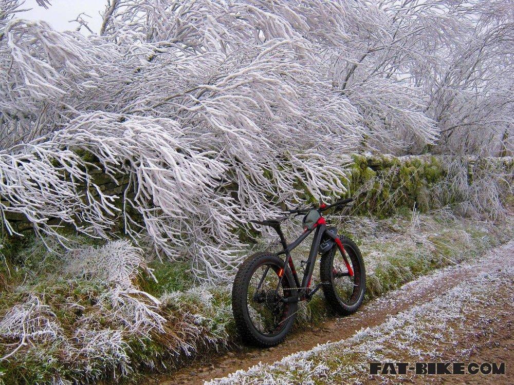 jack frost Image-1.jpg