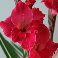 Flower FB