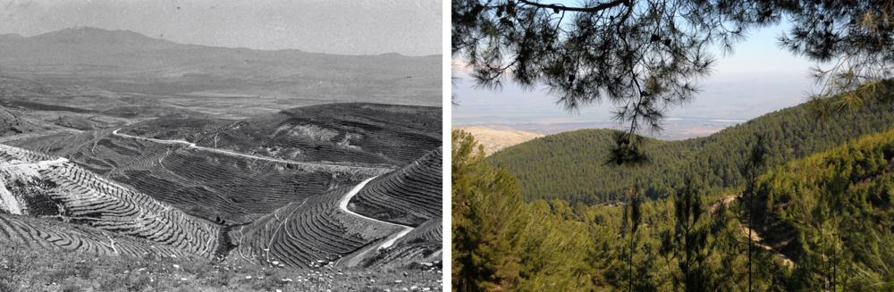 JNFs största skog Birya före (1958) och efter (2008) den planterades. Del av Bruno Ferts Les Absentees.