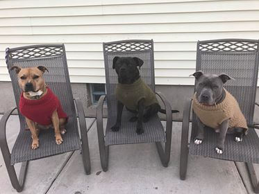 suzanne dogs 3.jpg