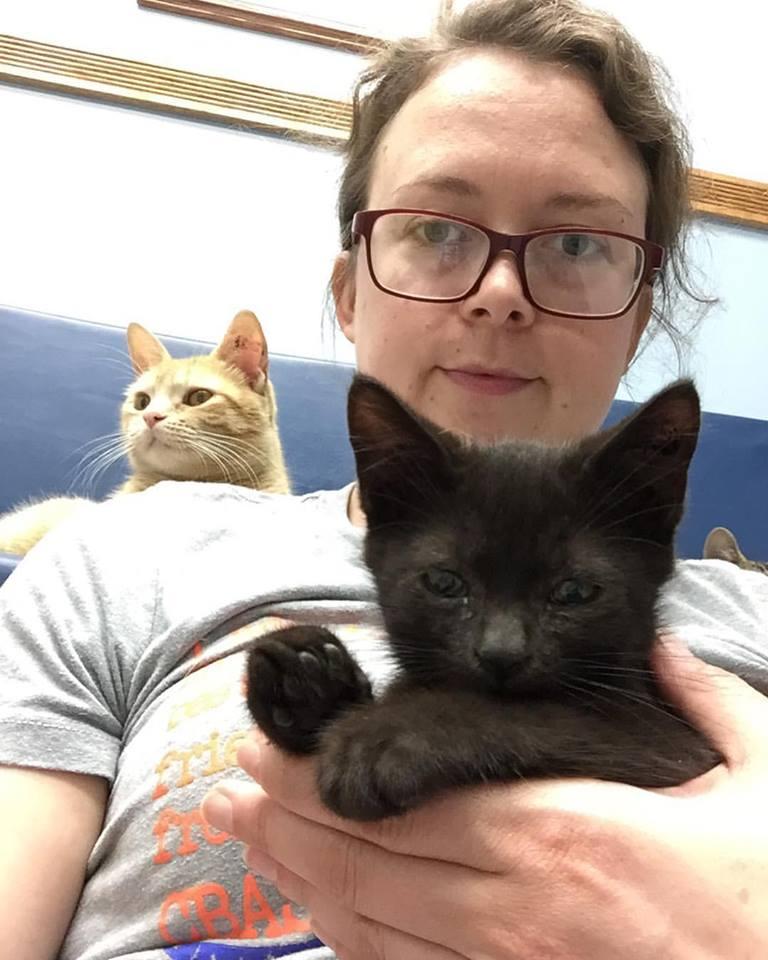 sheltercats.jpg