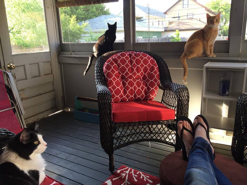 mycatio.jpg