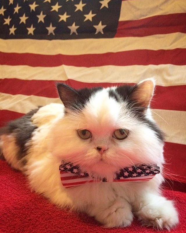 Not to go all pawlitical on you...but be sure to get your paws 🐾 out to the voting booths tomorrow. It's a big day. Who will it be? The #demoCats or the #rePuplicans? 🇺🇸 — — — — #lovemypersian #persiancat #pawlitics #pawlitician #persiansofinstagram #InstagramPawlitics #catsofinstagram #catsofig