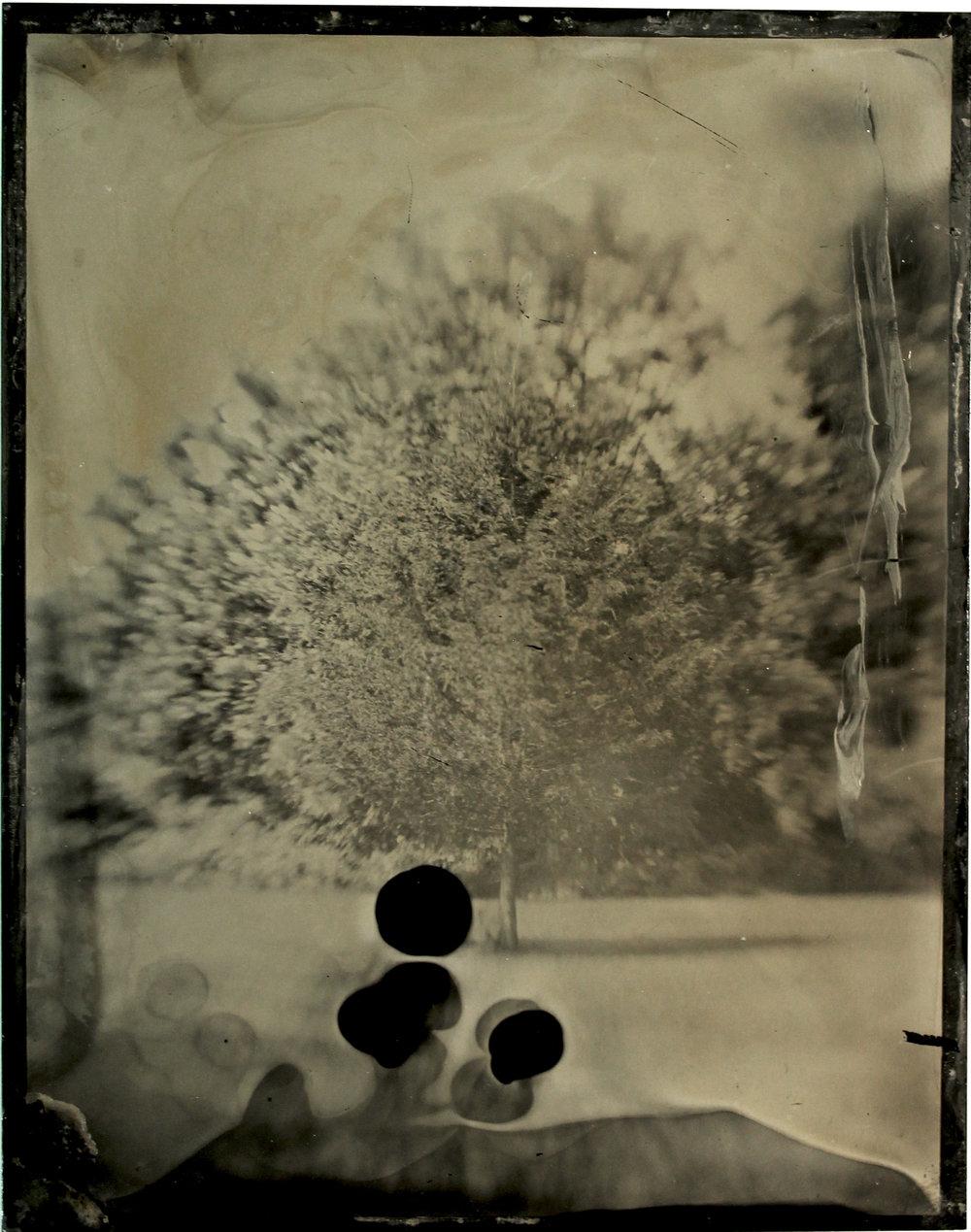 Growth  tintype, 2017
