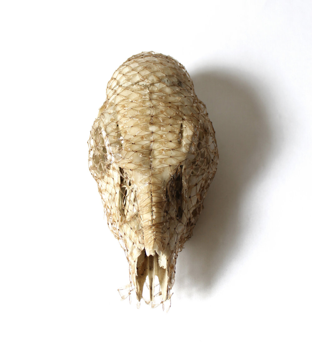 Shroud  fawn skull, honey bee wings, beeswax, PVA glue