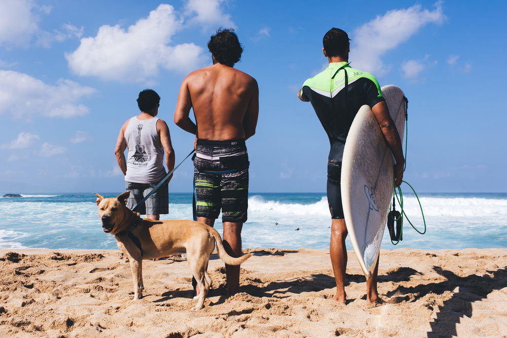 Dogs and surfers