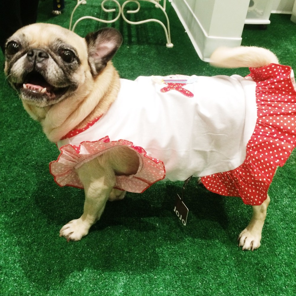 Winston Dog fish dress