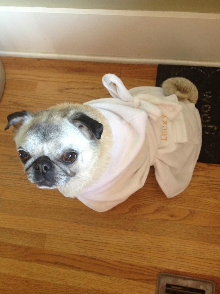 Stella Lucky Pup
