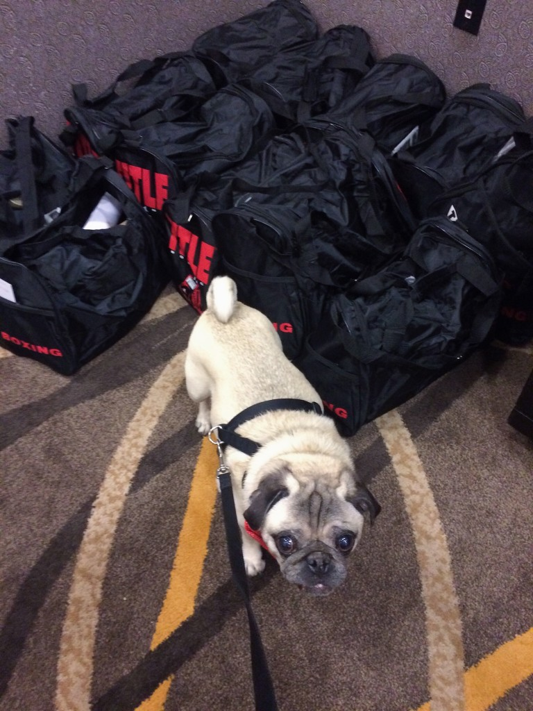 Mingus gives two paws up to the Unleashed goody bags