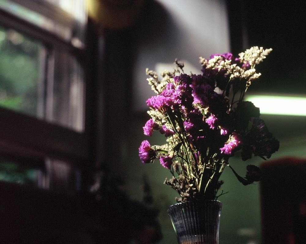 Flowers on Velvia.jpg