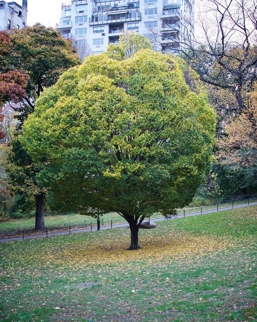Tree in Fall.jpg