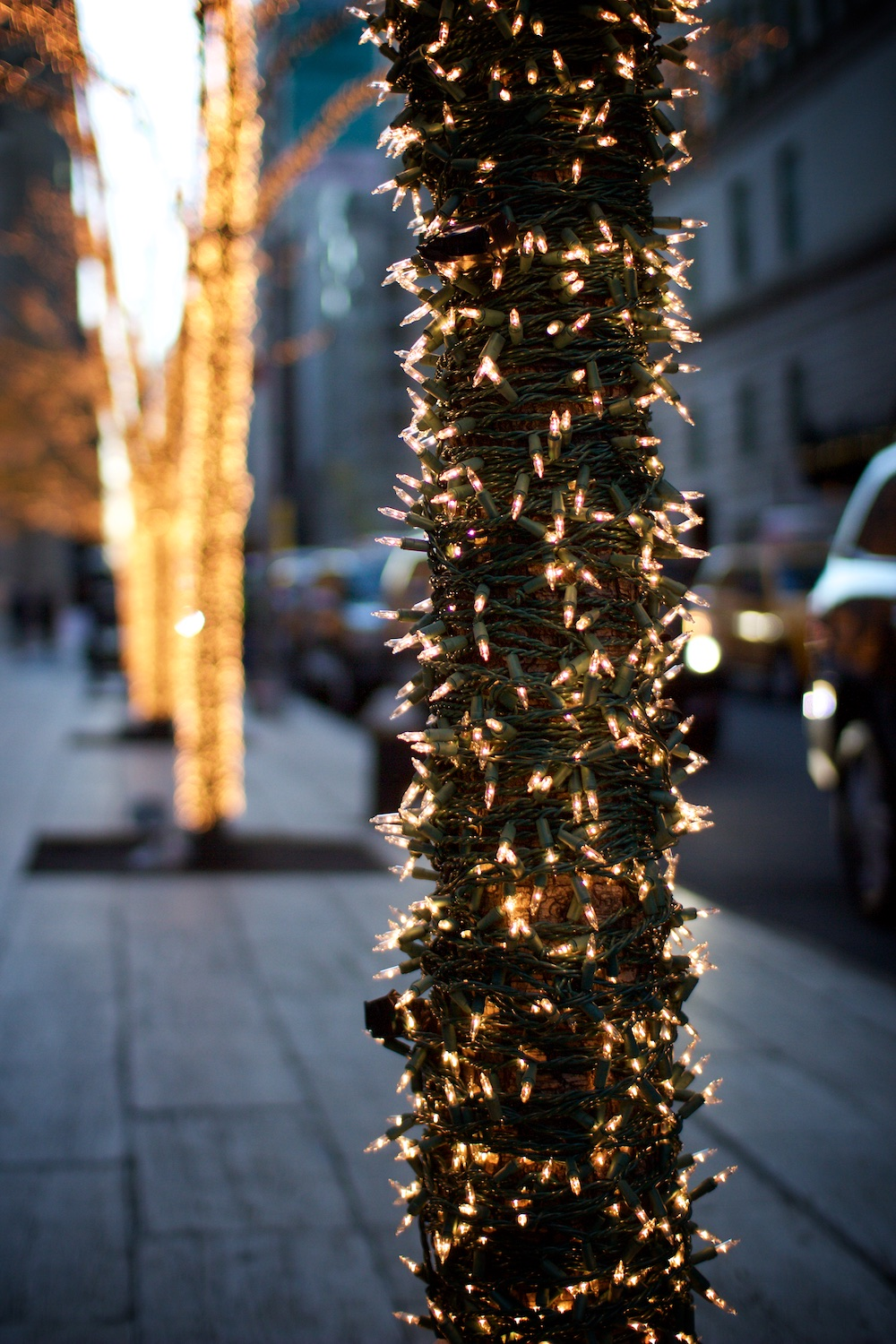 Light wrapped trees on 58th Street