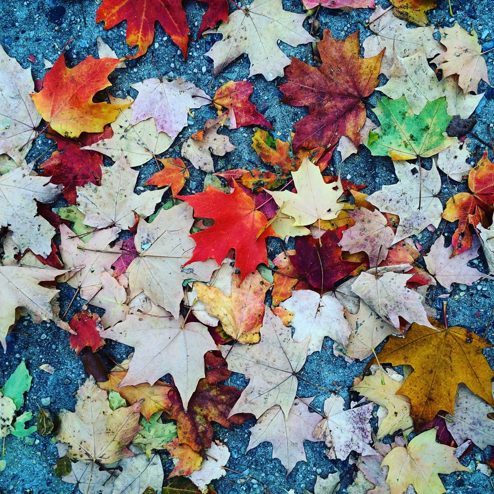 Sidewalk Leaves.jpg