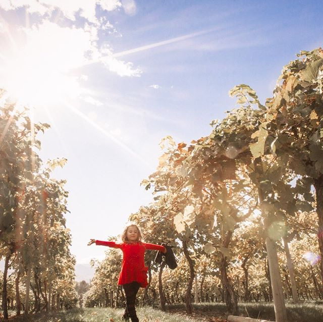My girl, fall in Kelowna. #kelowna #okanagan #kelownalife #sunshine #vineyards #winecountry #lifestylephotography #candid