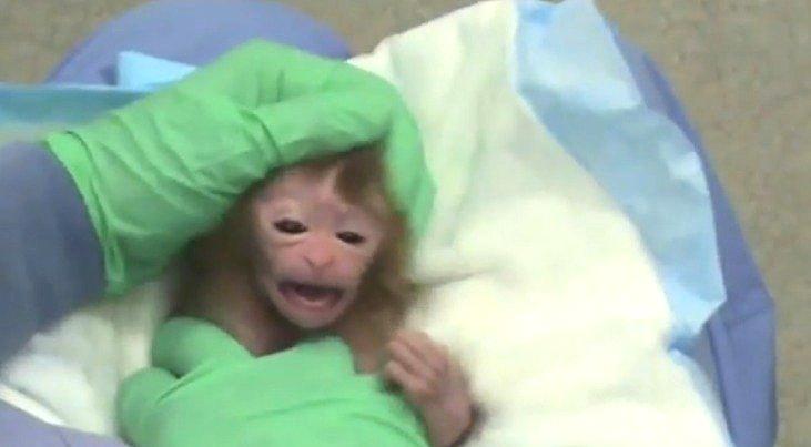 BabyMonkeyTesting