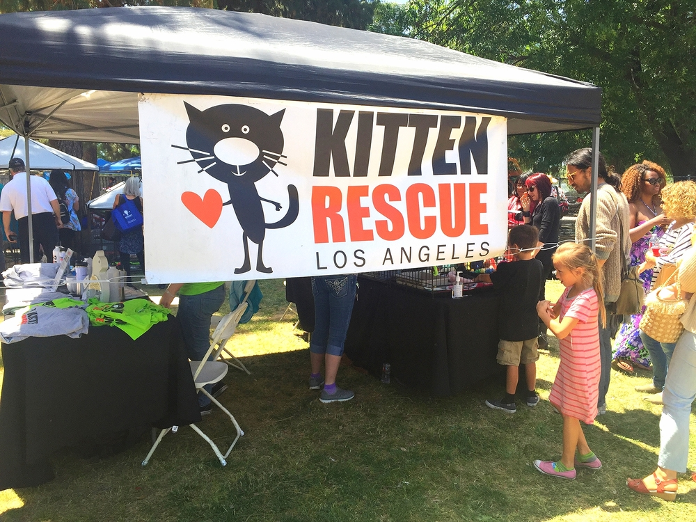 Kitten Rescue is a volunteer-run non-profit organization in Los Angeles
