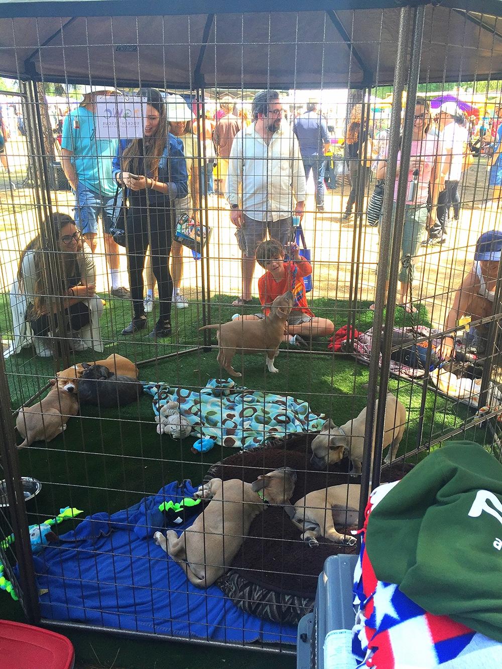 AGWC Rockin' Rescue Animal Adoption Center
