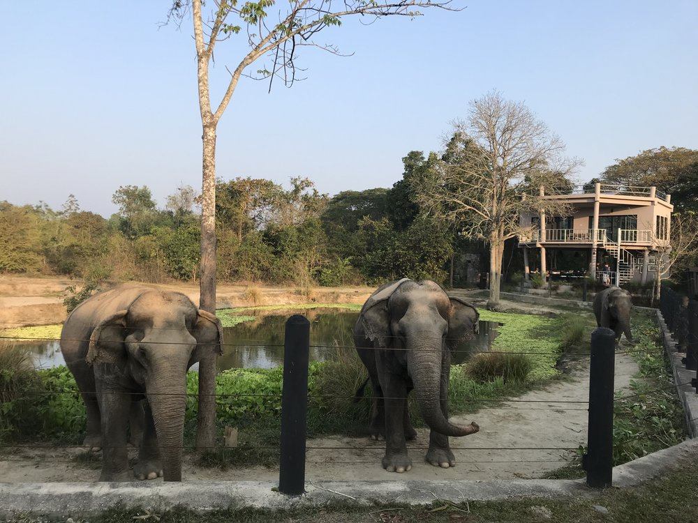 Elephants at Project 4 + WFFT's eco-lodge in the background