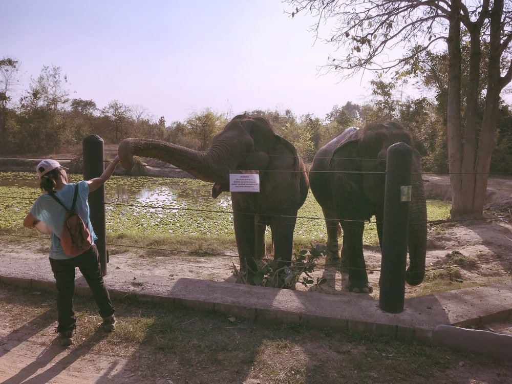 My last time feeding the elephants
