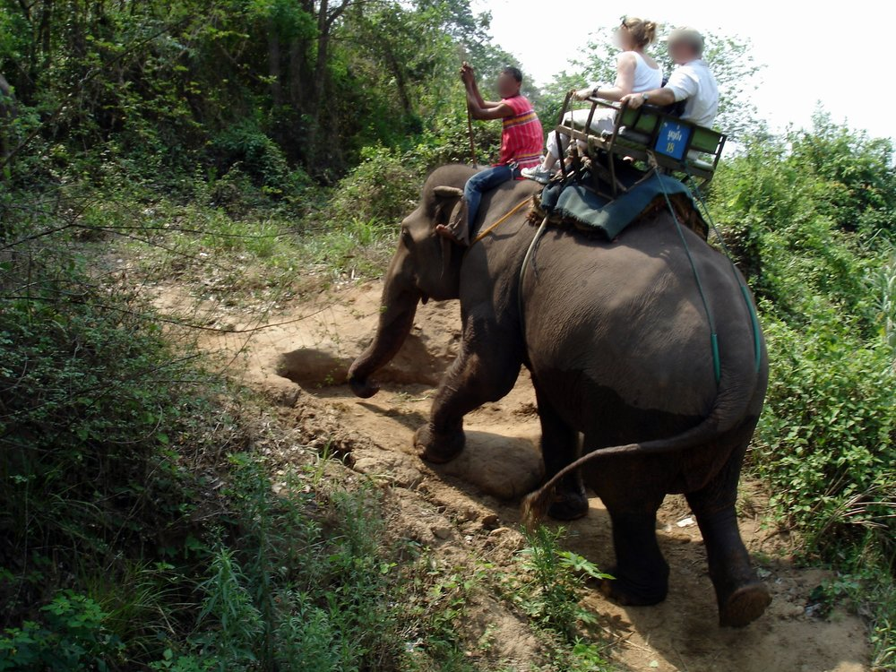 Elephant trekking causes spinal deformity in elephants who are also abuse behind the scenes