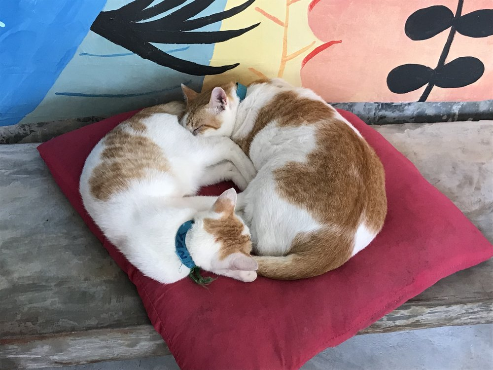 Yan and Junior, rescue cats of Lanta Animal Welfare