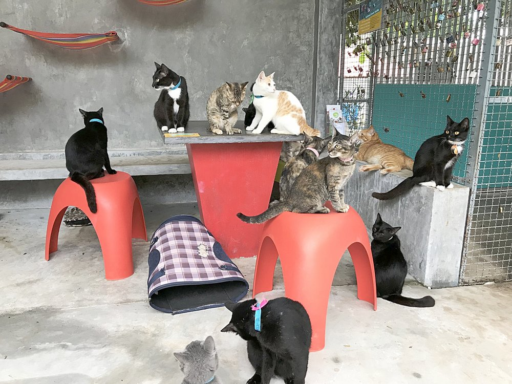 Rescue cats of Lanta Animal Welfare