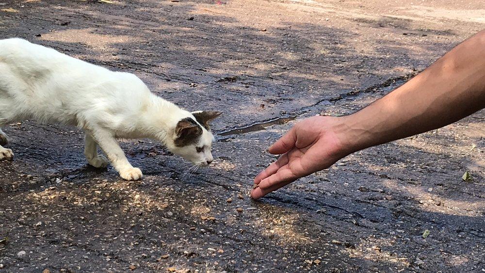 Feeding a stray cat